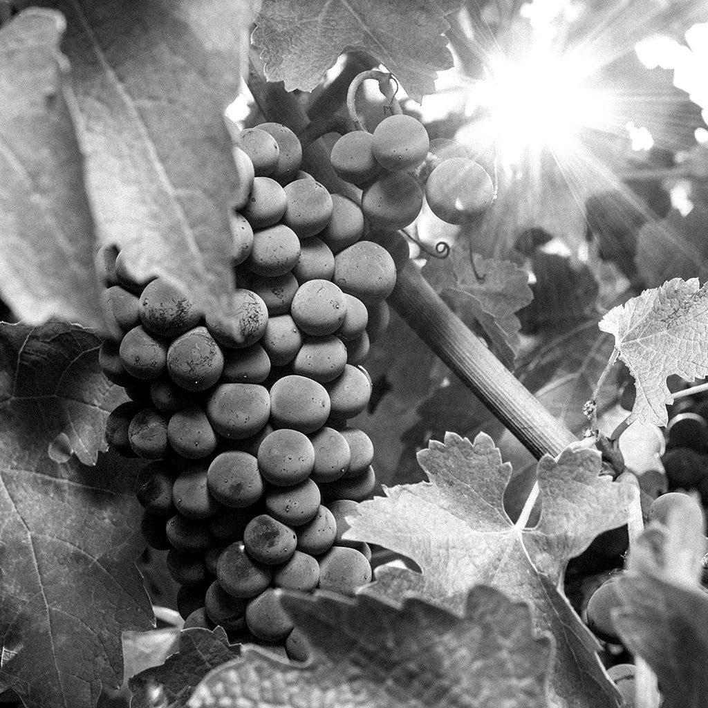 Baronesa P. wine Chile