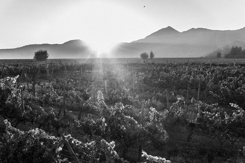 Vinas Baonesa P. red wine Chile Escudo Rojo